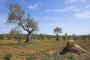 landschaft-Spanien-Oliven-Baum-Baeume-Feld-Felsen-Acker-blauer-himmel-A_DSC9581
