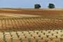 landschaft-Spanien-Wein-Reben-Weinbau-Weinstock-A_DSC9666a