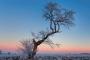 landschaft-Winter-Morgen-Raureif-Frost-Feld-Baum-rot-blauer-himmel-Niedersachsen-F_O1I1436-a