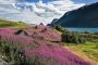 landschaft-Norwegen-fjord-Sogne-blumen-rot-huette-E_O1I2858a