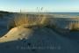 landschaft-panorama-sand-duenen-strand-hafer-meer-kueste-ellenbogen-list-Sylt-C_NIK_4105 Kopie