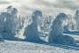 Brocken-harz-mystische-baum-baeume-gestalten-figuren-schneebedeckte-panorama-winter-schnee-verschneit-landschaft-Sachsen-Anhalt-C_NIK_3484a