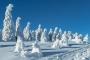 harz-mystische-baum-baeume-blauer-himmel-gestalten-figuren-schneebedeckte-winter-schnee-verschneit-landschaft-Sachsen-Anhalt-C_NIK_3576 Kopie