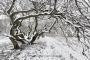 landschaft-Niedersachsen-suentel-buchen-schnee-winter-verschneit-G_O1I6822