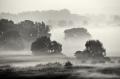Landschaftsfotos-Naturfotos-Schwarz-Weiss-Meerbruch-Morgenstimmung-Morgennebel-Nebel-Steinhuder Meer-Naturpark-A_NIK0122sw