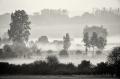 Landschaftsfotos-Naturfotos-Schwarz-Weiss-Meerbruch-Morgenstimmung-Morgennebel-Nebel-Steinhuder Meer-Naturpark-A_NIK0129sw