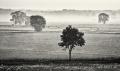 Landschaftsfotos-Naturfotos-Schwarz-Weiss-Meerbruch-Morgenstimmung-Morgennebel-Nebel-Steinhuder Meer-Naturpark-B_DSC0834sw