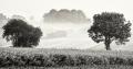 Landschaftsfotos-Naturfotos-Schwarz-Weiss-Meerbruch-Morgenstimmung-Morgennebel-Nebel-Steinhuder Meer-Naturpark-B_DSC0845-sw