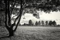 Landschaftsfotos-Naturfotos-Baum-Schwarz-Weiss-Steinhude-Steinhuder Meer-Naturpark-AXO1I8566sw