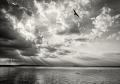 Landschaftsfotos-Naturfotos-fliegende-Moewe-Abendstimmung-Wolkenstimmung-Wolkenhimmel-Schwarz-Weiss-Steinhude-Steinhuder Meer-Naturpark-A_NIK0218sw