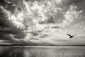 Landschaftsfotos-Naturfotos-fliegende-Moewe-Abendstimmung-Wolkenstimmung-Wolkenhimmel-Schwarz-Weiss-Steinhude-Steinhuder Meer-Naturpark-A_NIK0219sw