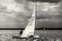 Sportfotos-Segeln-Segelboot-Segelsport-Sport-Wassersport-Regatta-Steinhuder-Meer-Naturpark-A_NIK1150-1A_SAM3721