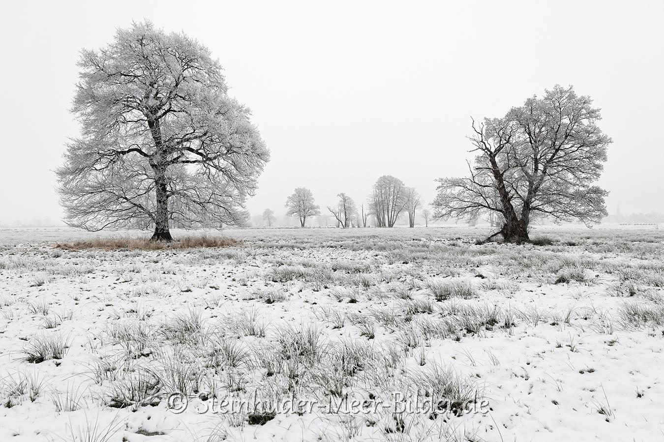 hagenburg--winter-steinhuder-meer-eis-schnee-zugefroren-eisdecke-naturpark-naturraum-region-C_SAM0256 Kopie
