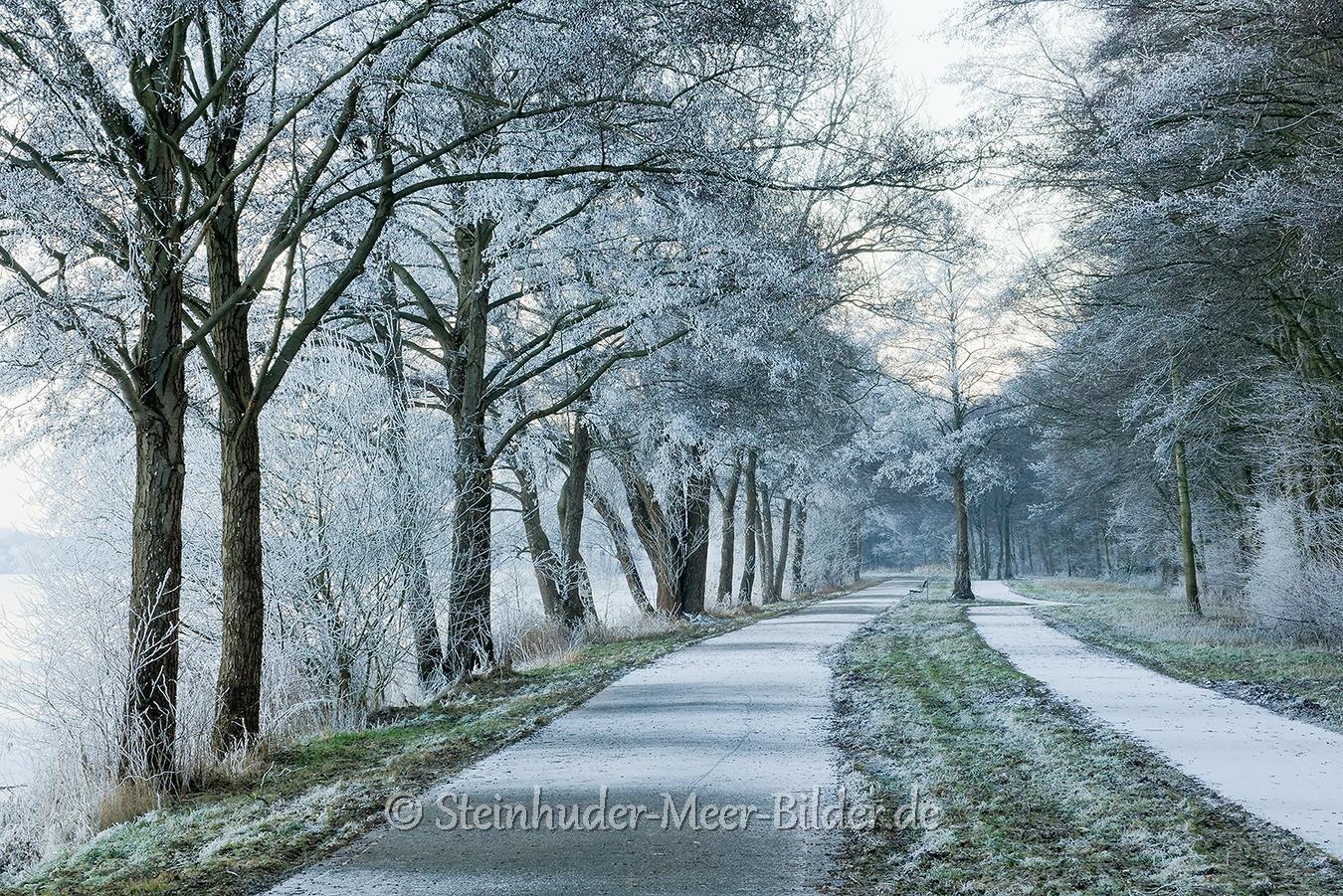 hagenburg--winter-steinhuder-meer-eis-schnee-zugefroren-eisdecke-naturpark-naturraum-region-RX_01142