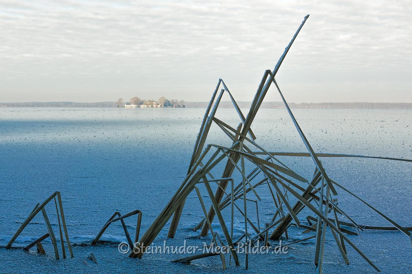 schilfhalme-winter-steinhuder-meer-eisdecke-schnee-zugefroren-eisdeckedecke-naturpark-naturraum-region-RX_01150