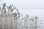 schilfhalme-winter-steinhuder-meer-eis-schnee-zugefroren-eisdecke-naturpark-naturraum-region-B_SAM0467 Kopie